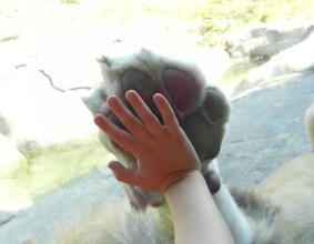 Image source: http://dallas.todaysmama.com/files/2011/11/Lion-close-encounters.jpg