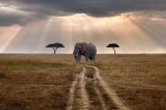 badfon.ru - elephant Kenya