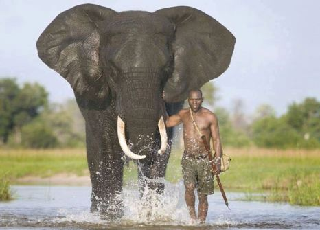 From Facebook - elephant and human - Life on Earth