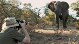 wildlife_photography_video_still_