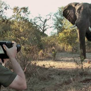 wildlife_photography_video_still_