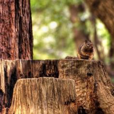 www.goodfon.ru - cutting trees