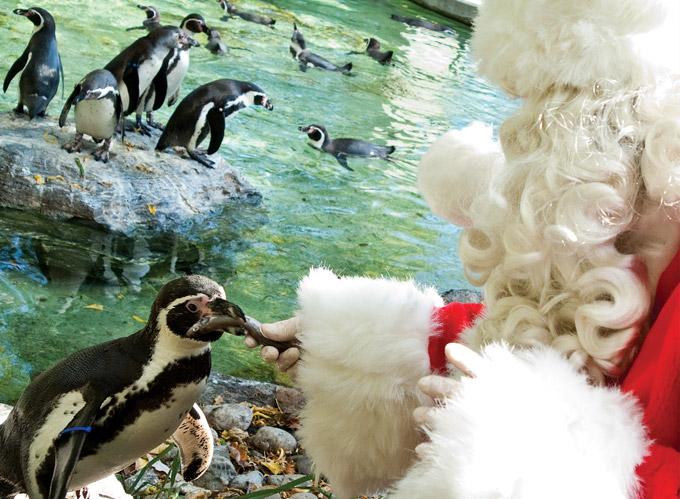 Santa-Days-Philadelphia-Zoo-680uw