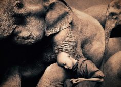 elephant-and-human_harmony-with-the-nature_01
