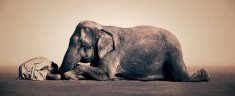 elephant-and-human_harmony-with-the-nature_06