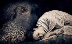 elephant-and-human_harmony-with-the-nature_13