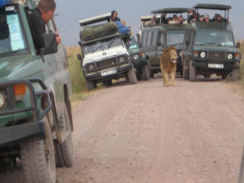 lion_cars_01