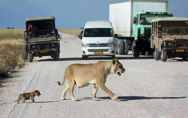 stop-the-serengeti
