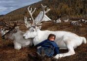 FB - Girl, Deear, Mongolia