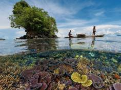 Planet Earth. Corals. Sea