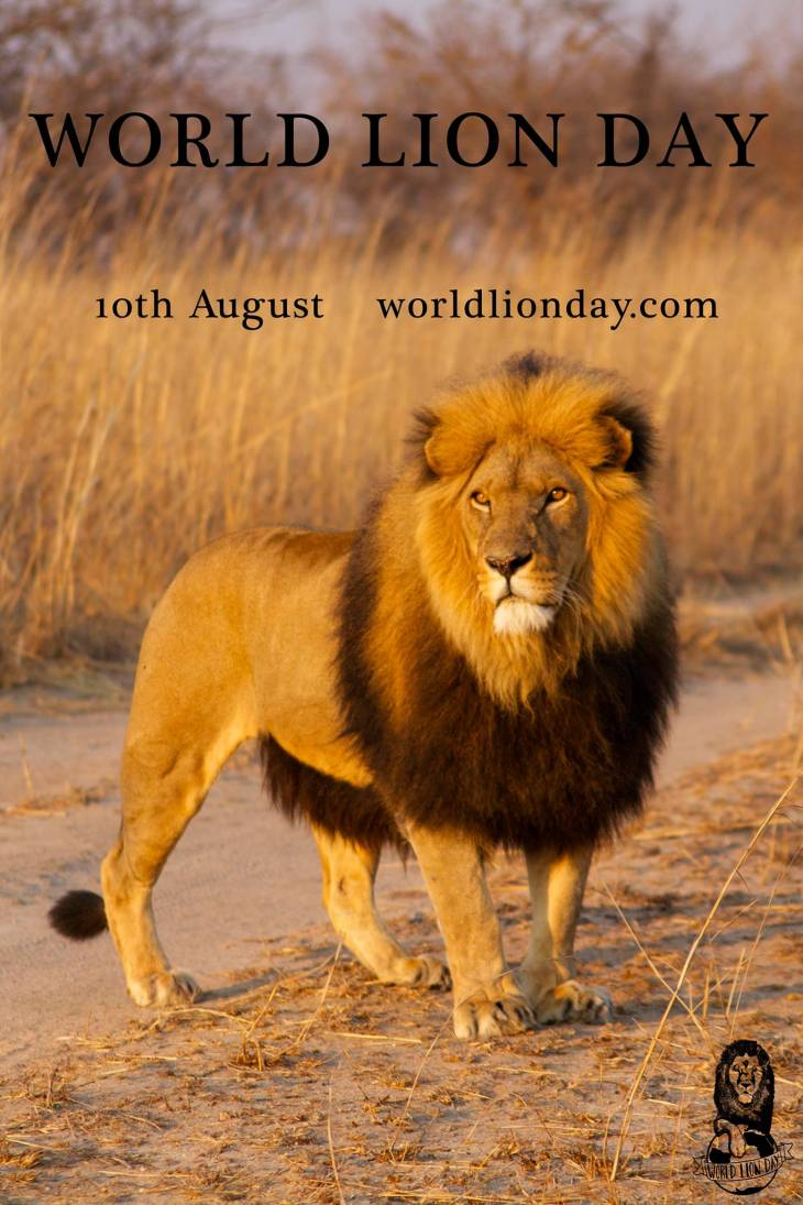World Lion Day 2014