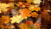 badfon.ru - autumn leaves 2