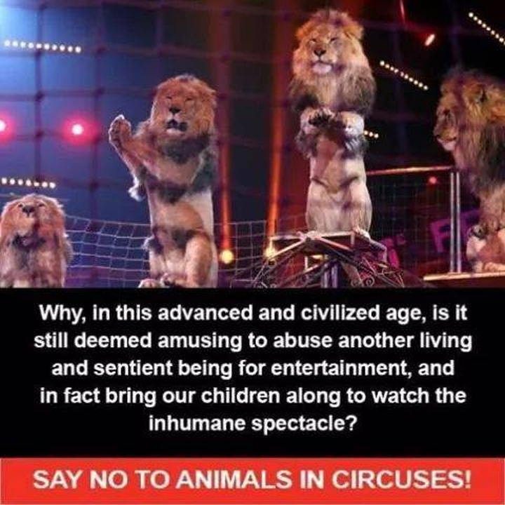 No to Animals n Circuses