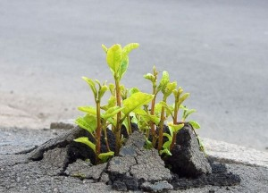 Flowers-growing-out-of-the-concrete