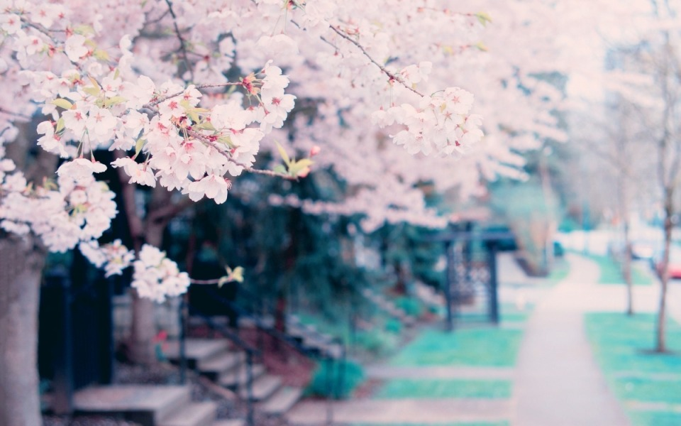 goodfon.ru_blossoms-spring-tree-cvety