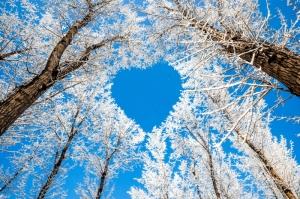 goodfon.ru_derevya-vetki-zima-sneg-nebo