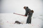 GULF OF ST. LAWRENCE - Bertrand Oucoin from Magdalen Islands kills a harp seal with a hakapik during the annual seal hunt. The first of a 3-step process is to ensure that the animal is rendered irreversibly unconscious. Seal meat is a popular item on the island and a source of fresh local meat every March. March 19, 2013. RANDY RISLING/TORONTO STAR