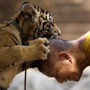 Tiger and Man