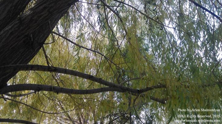 Autumn Willow - photo 02