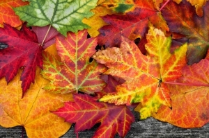 badfon.ru_autumn-leaves-colorful-948