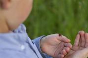 ladybug-learning
