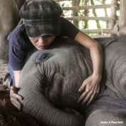 smiling-elephant