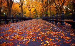autumn-in-new-york_image