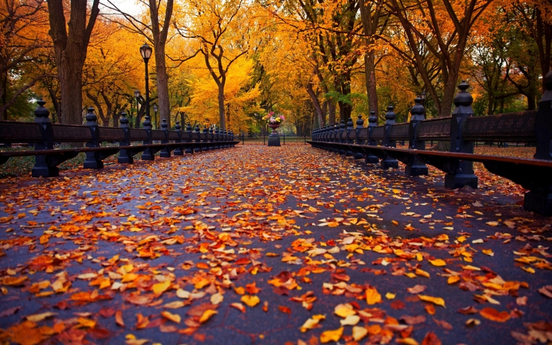 autumn-in-new-york_image