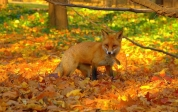 autumn_04