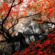 autumn_07