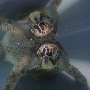 APphoto_Thailand-Turtle-Trouble-01