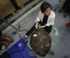 APphoto_Thailand-Turtle-Trouble-09
